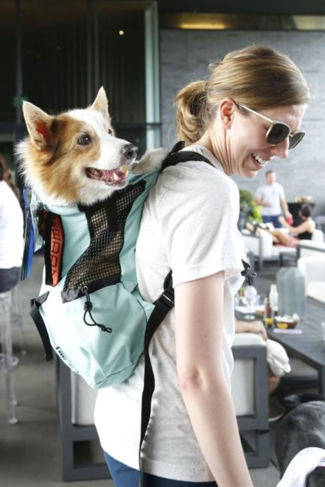 Photo -  Teddy's owner carries him in a backpack during Pups on the Patio. Teddy is 16 years old and has a condition that prevents him from using his back legs. [PAXSON HAWS/THE OKLAHOMAN]