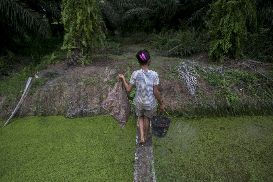 Photo -  A child carries palm kernels collected from the ground across a creek at a palm oil plantation in Sumatra, Indonesia, Monday, Nov. 13, 2017. Child labor has long been a dark stain on the $65 billion global palm oil industry. Though often denied or minimized as kids simply helping their families on weekends or after school, it has been identified as a problem by human rights groups, the United Nations and the U.S. government. (AP Photo/Binsar Bakkara)