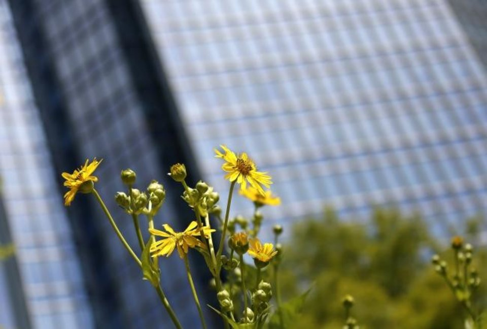 Photo -  Devon Tower provides a canvas for a cup plant at Myriad Botanical Gardens. [JIM BECKEL/THE OKLAHOMAN]