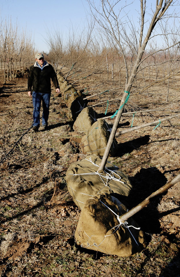 Photo - Monty Marcum, Marcum's Nursery & Tree Farm, walking a row of Frontier Elms being dug up for sale at Marcum's Nursery & Tree Farm in Goldsby Monday, Jan. 14, 2008. BY PAUL B. SOUTHERLAND, THE OKLAHOMAN ORG XMIT: KOD
