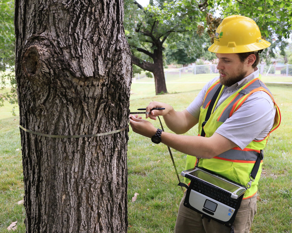Photo -  Joseph Steinfeld, an urban forester with Davey Resource Group, takes measurements of a sugar maple tree last June at Will Rogers Park in Oklahoma City. [Photo by Paul Hellstern, The Oklahoman Archives]