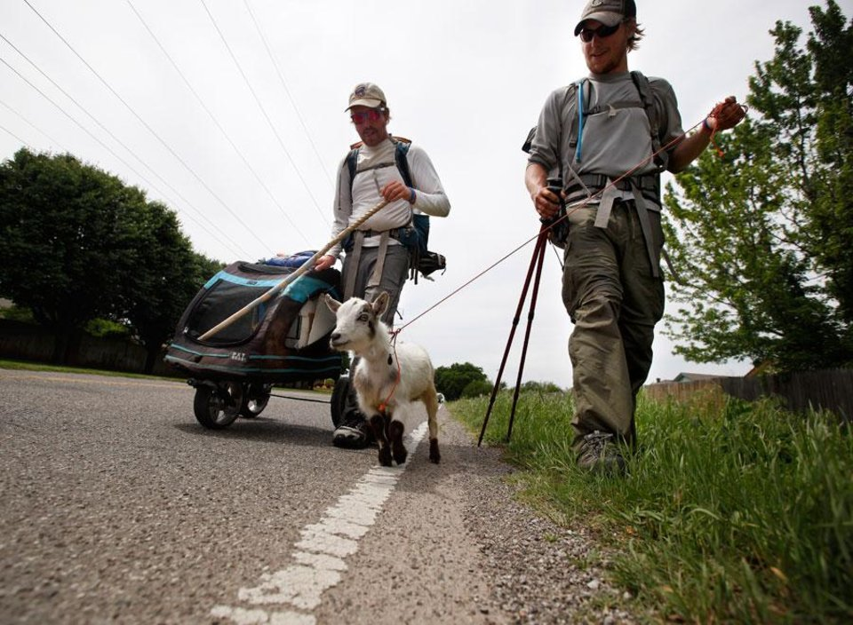 "Photo -  Matt Gregory, left, and Phillip Aldrich walk with Wrigley along Wilshire Road in Oklahoma City, Tuesday, Jan. 8, 2008. The groups is walking with a a goat  to ""Crack the Curse"" of the Chicago Cubs and to raise money for Fred Hutchinson Cancer Research Center  by walking 19,000 miles. Photo by Sarah Phipps, The Oklahoman."