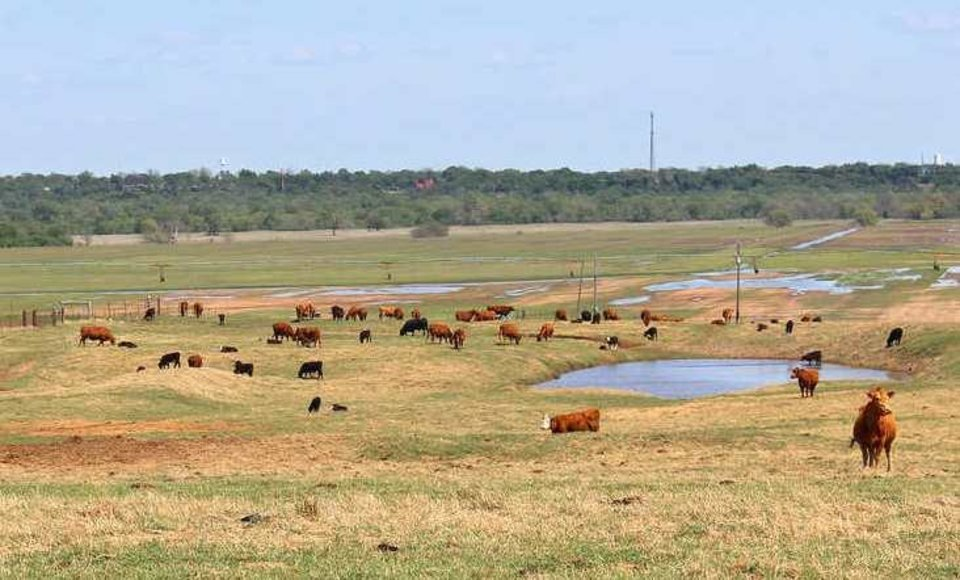 Photo -  Cattle graze on part of what was Johnson ranch land. [PHOTO PROVIDED BY SCHRADER REAL ESTATE & AUCTION CO.]