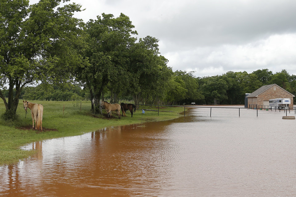 Photo - Horses are tied to trees near a home surrounded by floodwaters on Council just north of NW 164 in Oklahoma City, Tuesday, May 21, 2019. [Bryan Terry/The Oklahoman]