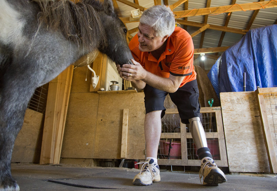 Photo - Leo Schmitz works with the miniature horses that he raises with this wife Sharon at their home in Skiatook, Okla., on Thursday, Sept. 29, 2016.  Schmitz was among the people who were injured when a car ran through a police barricade during last year's Oklahoma State homecoming parade. puts his works shoe on his prosthetic leg as he prepares to go to the miniature horse barn with Photo by Chris Landsberger, The Oklahoman