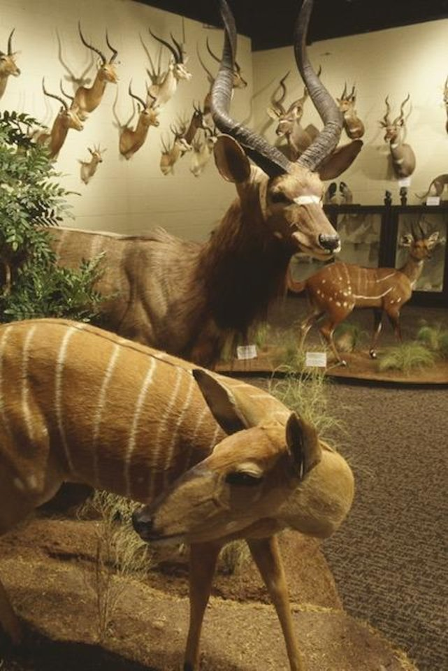 Photo -  Some of the animals that are part of The Crawford Collection exhibit in Frederick. [Provided by Richard Tomlinson]