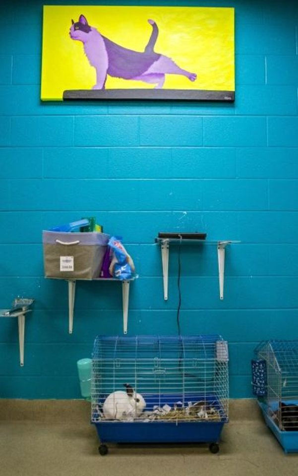 Photo -  Lack of space has changed cat rooms to house rabbits and gerbils at the Oklahoma City Animal Welfare shelter in Oklahoma City, Okla. on Thursday, Nov. 14, 2019.  The new MAPS4 proposal for new animal shelter will be up to voters on Dec. 10.   [Chris Landsberger/The Oklahoman]