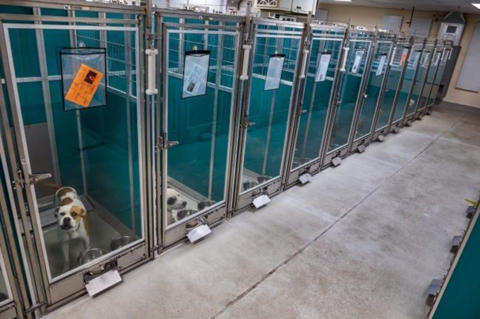 Photo -  Dogs fill the kennels with lack of natural light at the Oklahoma City Animal Welfare shelter in Oklahoma City, Okla. on Thursday, Nov. 14, 2019.  The new MAPS4 proposal for new animal shelter will be up to voters on Dec. 10.   [Chris Landsberger/The Oklahoman]