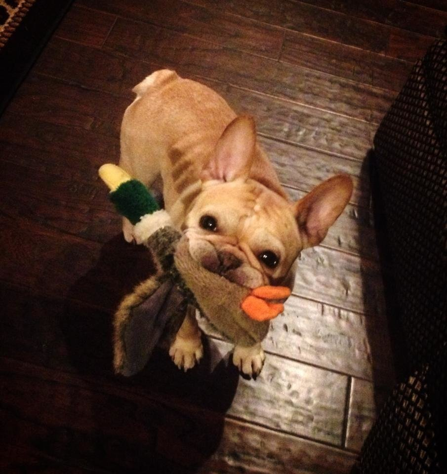 Photo - Dexter enjoying his favorite fall activity... duck hunting!  by Shayla Ann #newsoknow #Life