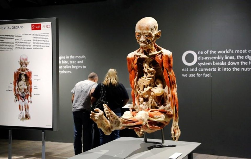 Interviews Photos Video Bodies Revealed Exhibit Showcases