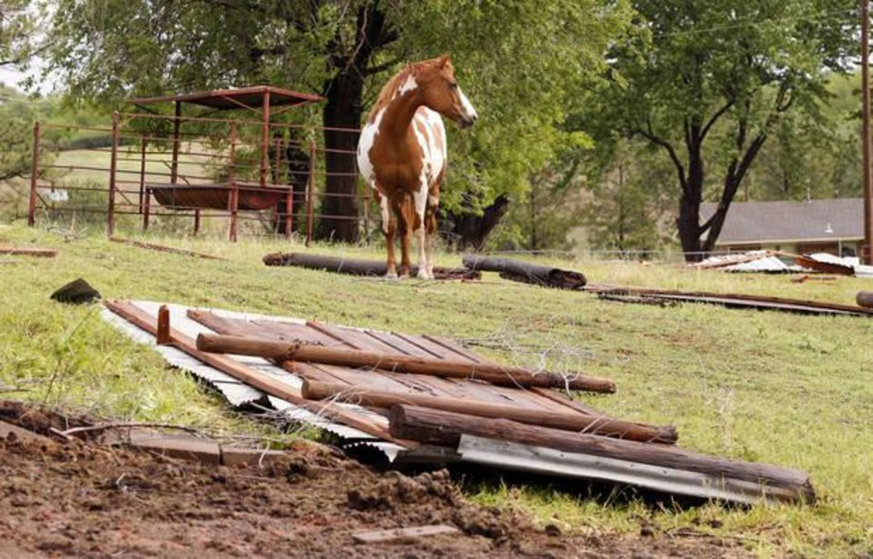 Photo - Mary Flueckiger's horse Annie stands near debris on her property on Thursday, May 3, 2018 in Purcell, Okla.. Flueckiger lost several outbuildings and trees in Wednesday's storms but her horses escaped uninjured.  Photo by Steve Sisney, The Oklahoman