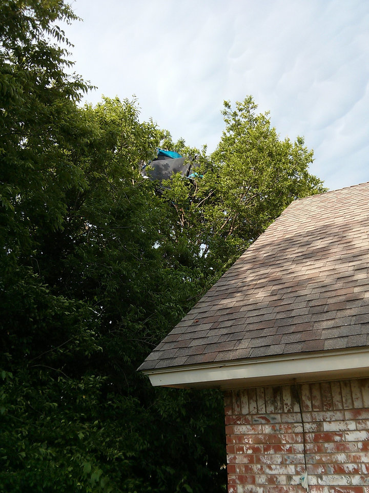 Photo - A trampoline rests high atop a tree in the Hidden Valley neighborhood in southeast Edmond, just east of Bryant and north of 33rd. Photo by Patrick Deaton