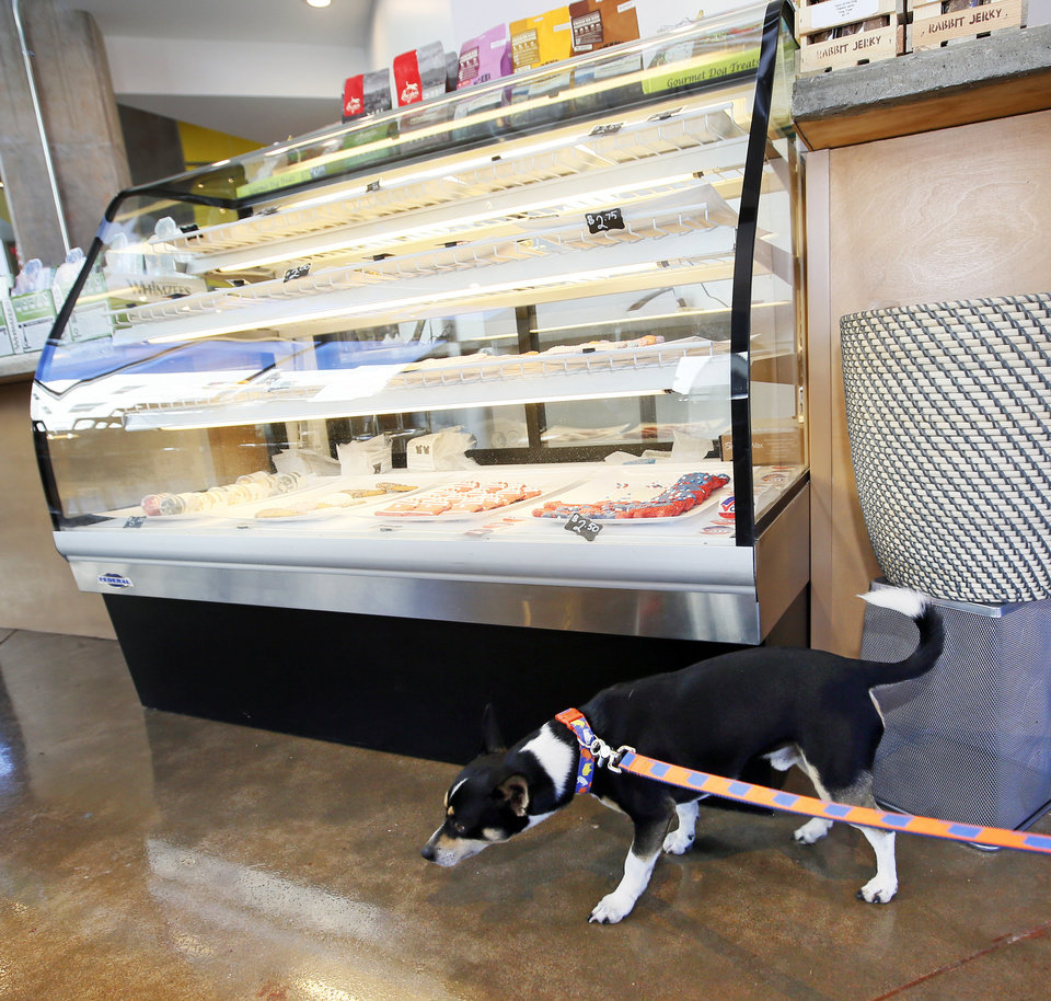 Dogs spur business ventures in oklahoma citys deep deuce news ok pistol a rat terrier walks past a case of dog treats at bone dog boutique and self serve dog wash at 100 ne 2 photo by nate billings the oklahoman solutioingenieria Image collections