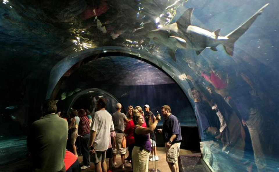 Photo - Visitors to the Oklahoma Aquarium in Jenks get a close-up look at sea life such as the bull shark swimming above them as they walk through a glass tunnel. (CHRIS LANDSBERGER, THE OKLAHOMAN)