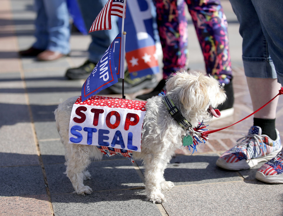 Photo - Paisley, owned by Ronda Peterson,  of Edmond, Okla.,  is pictured during a rally for President Trump at the Oklahoma state Capitol in Oklahoma City,  Saturday, Nov. 7, 2020. [Sarah Phipps/The Oklahoman]
