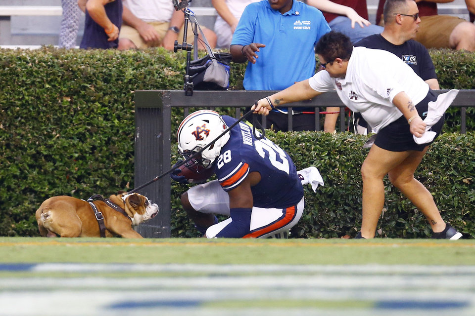 Photo - Auburn running back JaTarvious Whitlow (28) runs into the mascot for Mississippi State, Bully, after scoring a touchdown during the first half of an NCAA college football game, Saturday, Sept. 28, 2019, in Auburn, Ala. (AP Photo/Butch Dill)