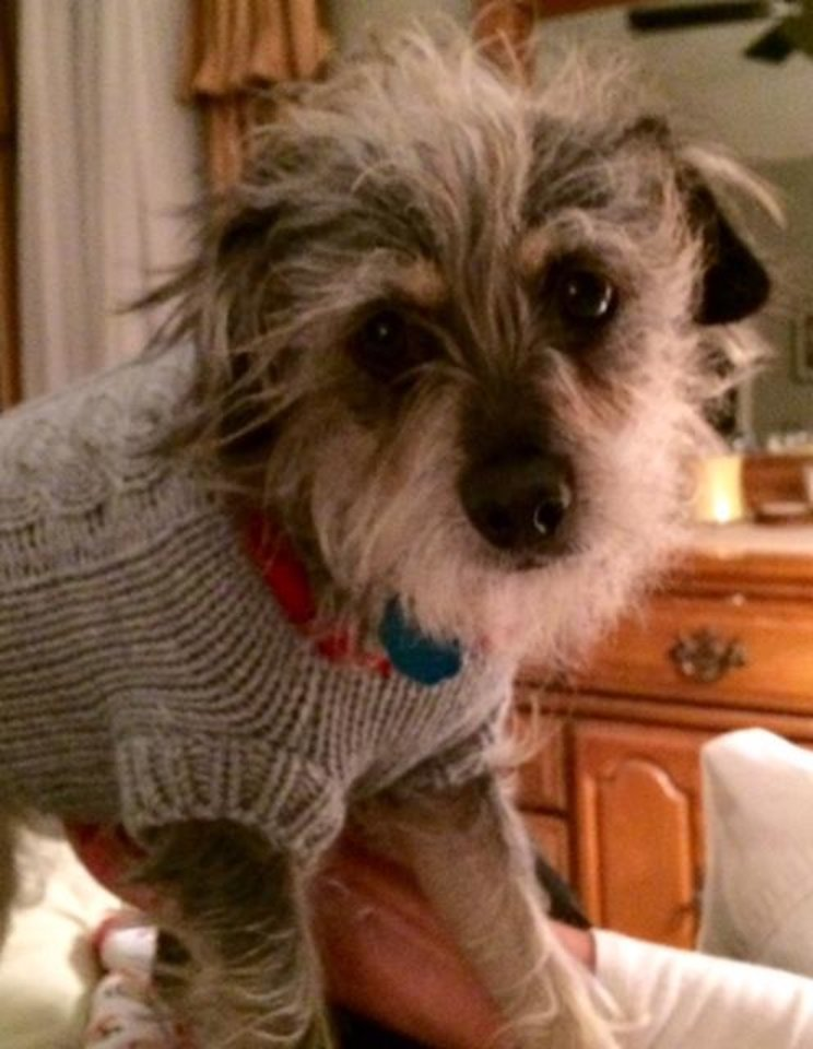 Photo - Stella, showing off her new sweater too! by John Gullo #newsoknow #Life