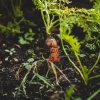 Want to grow your own food? Here are tips to get started