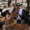 Man shelters 300 dogs from Hurricane Delta in...