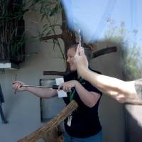 Sabrina Heise records a live social media feed with the red pandas in their habitat at the Oklahoma City Zoo last week.  The zoo is using virtual...