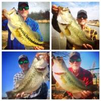 Bill Tharp shows off four bass caught in March of last year all in the same week at different locations. (Top left) A bass from a watershed in...