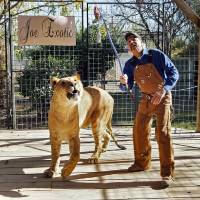 Joe Exotic works with Boco, the male Li-Liger at Greater Wynnewood Exotic Animal Park on Thursday, Dec. 1, 2016 in Wynnewood, Okla. [The Oklahoman...