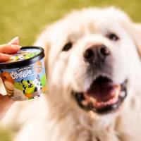 Ben & Jerry's Doggie Desserts are set to arrive in grocery and pet stores this month. [Provided]