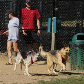Dog days: Oklahomans cope with windy weather Wednesday June 10, 2020