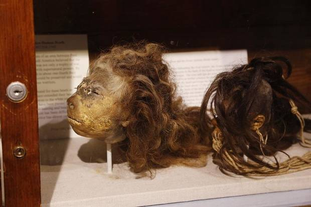 Shrunken heads are among the artwork and artifacts from around the world displayed at the Mabee-Gerrer Museum of Art Friday, Aug. 9, 2019. The Shawnee museum is celebrating its centennial in 2019. [Jim Beckel/The Oklahoman]