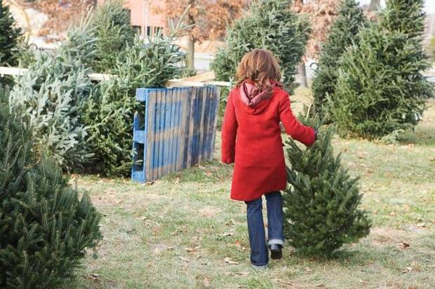 Moesel: Nature gets ready to deck the halls