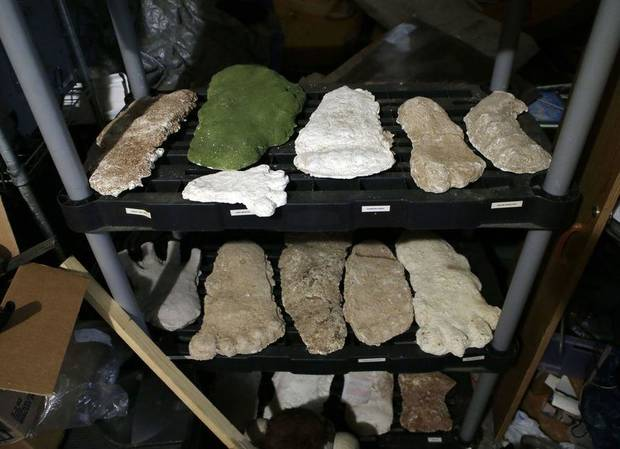 Bigfoot researchers examine recent reported sighting in Oklahoma | The Oklahoman