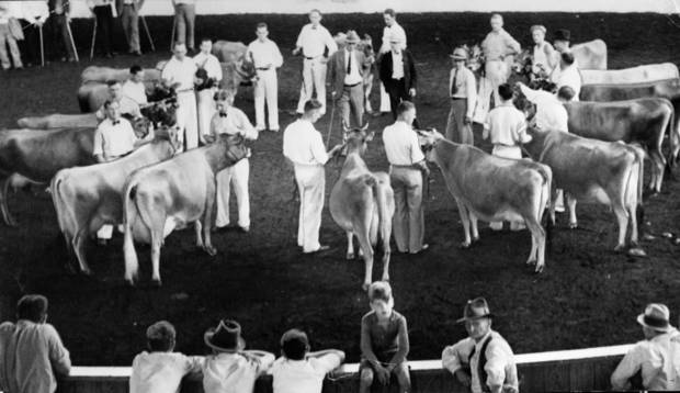 """Here is the largest class of cattle judged at the State Fair. Seventeen 4-year-old Jersey cows, owned by exhibitors from four states. There are usually four to eight entries in any judging class, but this one sets a new mark here."" Cattle judge in center of exhibitors is F. W. Atkeson of Manhattan, KS. Staff photo dated 9/25/1935; photo ran in the 9/25/1935 Oklahoma City Times."
