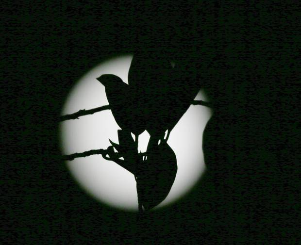 Leaves are silhouetted against a blue moon as seen from Taguig city east of Manila, Philippines, Friday, July 31, 2015. AP Photo