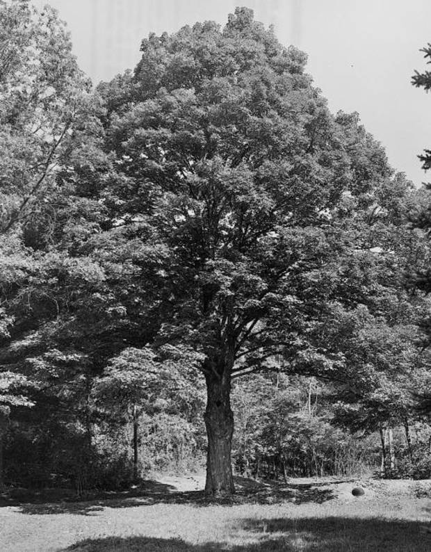 Nature & You: Tree identification can become overwhelming