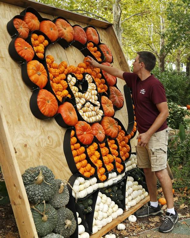 Nate Tschaenn, Director of Horticulture, places a pumpkin in a lion display. Set up for Pumpkinville in the Children's Garden at the Myriad Botanical Gardens, Wednesday, October 9, 2019. [Doug Hoke/The Oklahoman]
