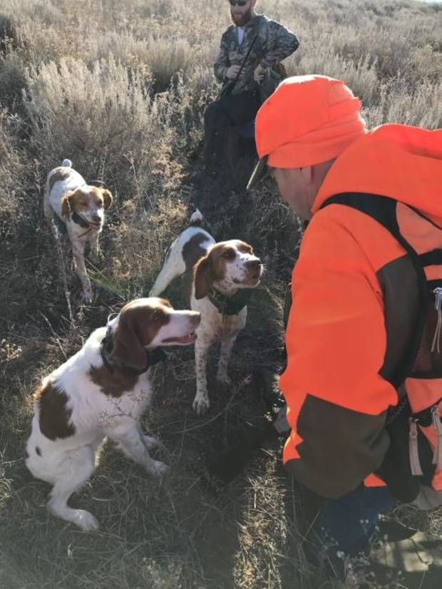 Bird hunters are hoping the quail season won't be pointless