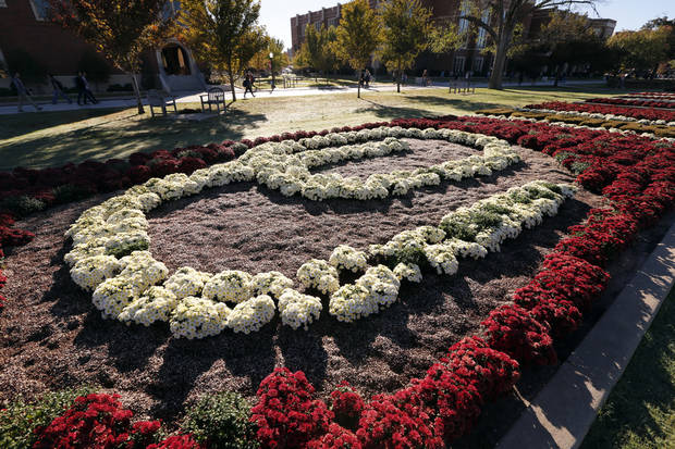 In this 2014 file photo, mums are blooming on the South Oval of the University of Oklahoma in advance of Homecoming in Norman. (Photo by Steve Sisney, The Oklahoman)