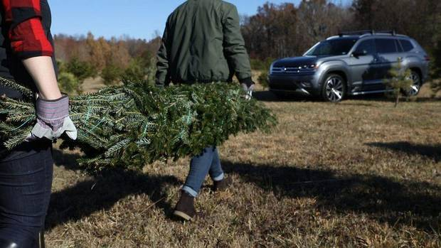 Christmas tree shopping: How to properly secure a holiday tree to your vehicle