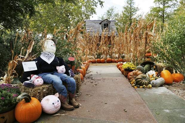 Thousands of pumpkins, hundreds of gourds, a variety of fall foliage are set up for Pumpkinville in the Children's Garden at the Myriad Botanical Gardens, Wednesday, October 9, 2019. [Doug Hoke/The Oklahoman]