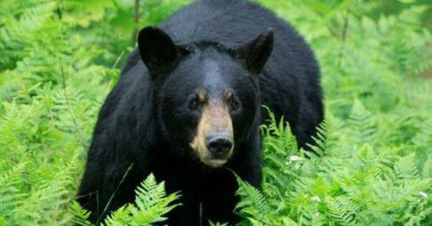700-pound black bear shot in New Jersey sets world record, bowhunting group says