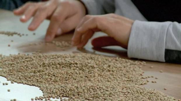 Syria withdraws 'Doomsday' seeds (2015)