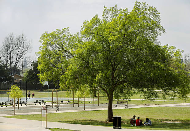 Most Common Trees In Oklahoma City Parks