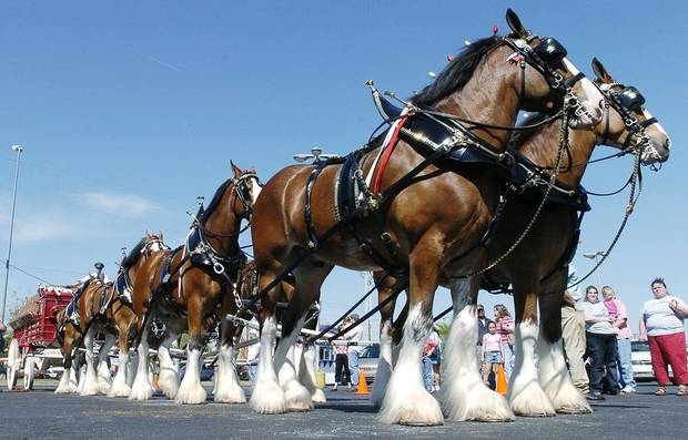 Rocklahoma to feature Budweiser Clydesdales, graffiti art