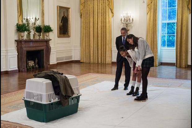 President Barack Obama and daughters Sasha and Malia look in on Mac, one of two turkeys spared this year from the Thanksgiving dinner table by presidential pardon, in the East Room of the White House prior to the annual National Thanksgiving Turkey pardon ceremony, Nov. 26, 2014. [Wikimedia commons White House photo by Pete Souza]