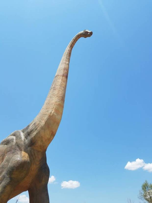 An full-scale Brachiosaurus rises high above the Kansas plains at the new Field Station: Dinosaurs attraction in Derby, a suburb of Wichita. [Photo by Brandy McDonnell, The Oklahoman]