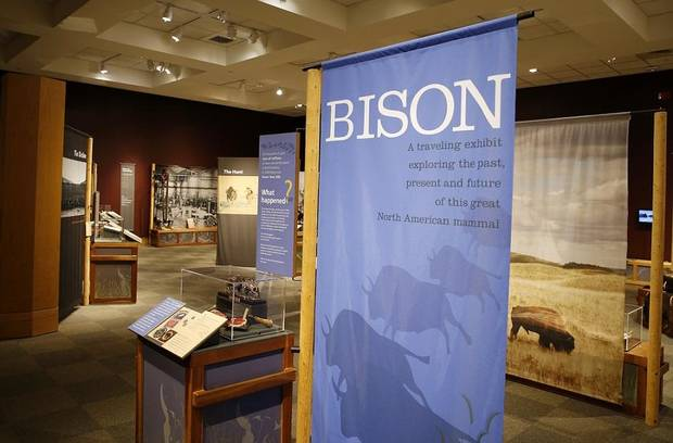 "Signs mark a section about the history of the bison in ""Ancient. Massive. Wild – The Bison Exhibit"" at the National Cowboy & Western Heritage Museum in Oklahoma City, Thursday, Feb. 7, 2019. [Photo by Nate Billings/The Oklahoman]"