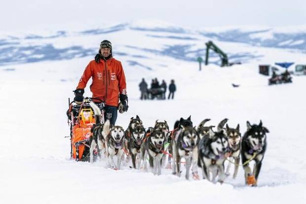 Socially distant by nature, Iditarod mushers carry on