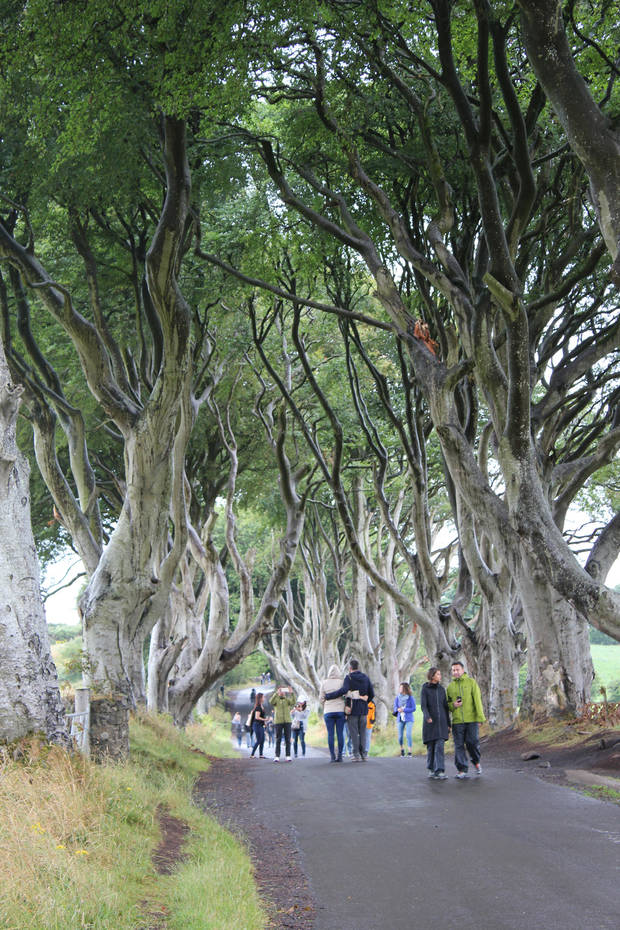 The Dark Hedges, also known as the Kings Road. This is where Arya Stark escaped Kings Landing early in the show's run. (Matt Patterson)