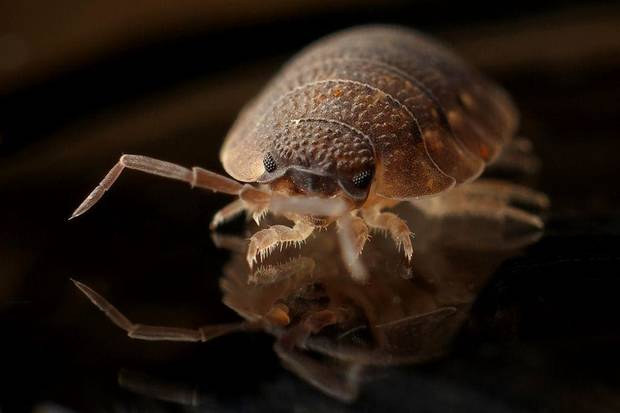 'Bed Bug City?' These are the worst spots for bedbugs, pest control company reports