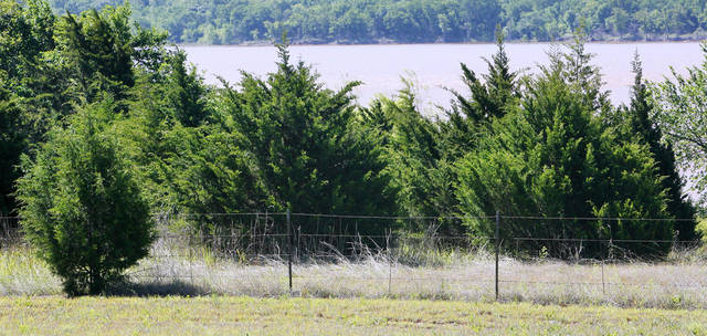 Nature & You: How can cedar trees be both a native and a ...